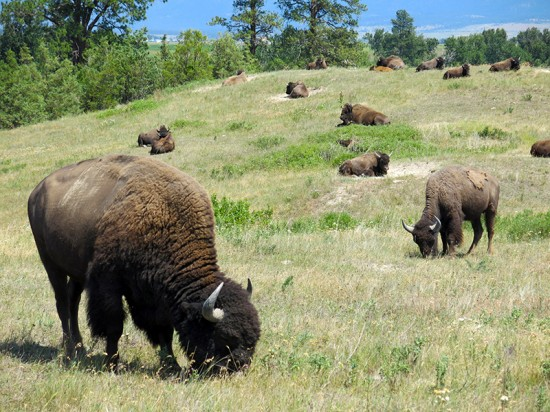 National Bison Range by Jets Like Taxis