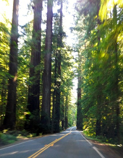 Humboldt Redwoods State Park by Jets Like Taxis