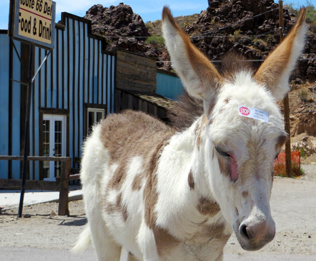 Oatman, Arizona on Route 66 by Jets Like Taxis