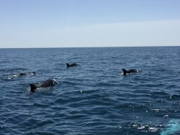 Dolphin Watching in Lagos, Portugal by Jets Like Taxis