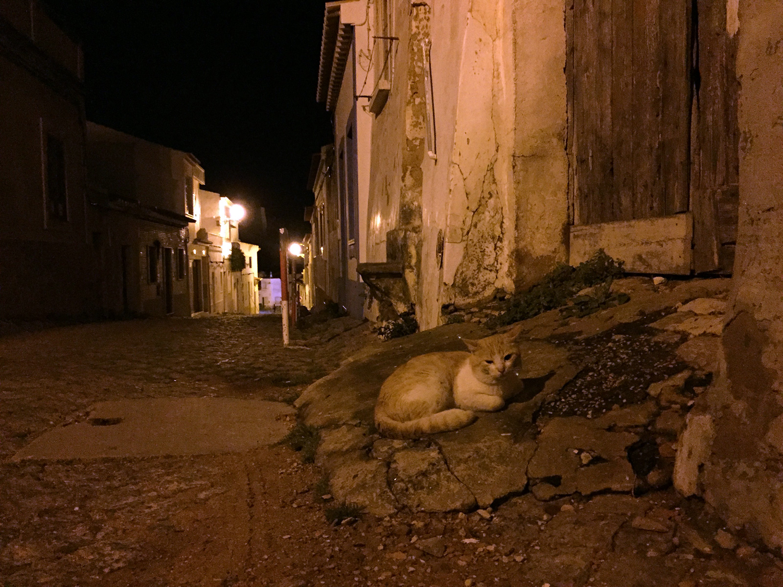 Cats in Lagos, Portugal by Jets Like Taxis