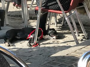 Dogs in Seville, Spain by Jets Like Taxis